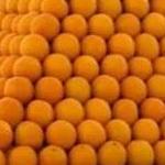 معمای ریاضی: پرتقال فروش ریاضیدان!